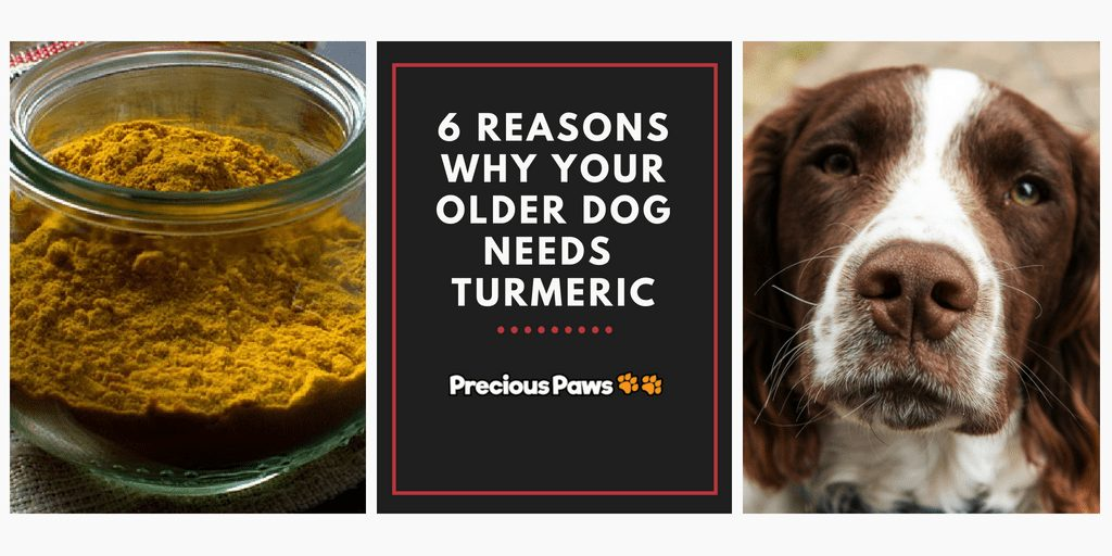 6 Reasons Why Your Older Dog Needs Turmeric Every Day