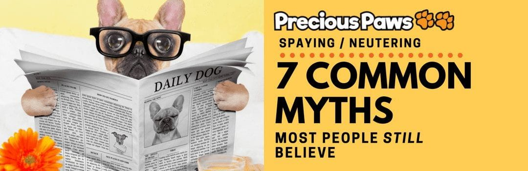 7 Common Myths About Spaying and Neutering