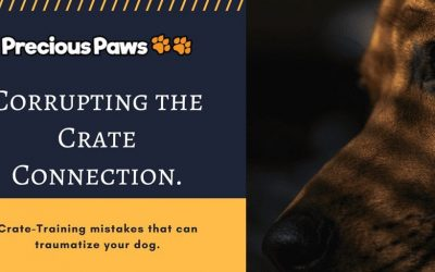 3 Crate Training Mistakes You Should Never Make