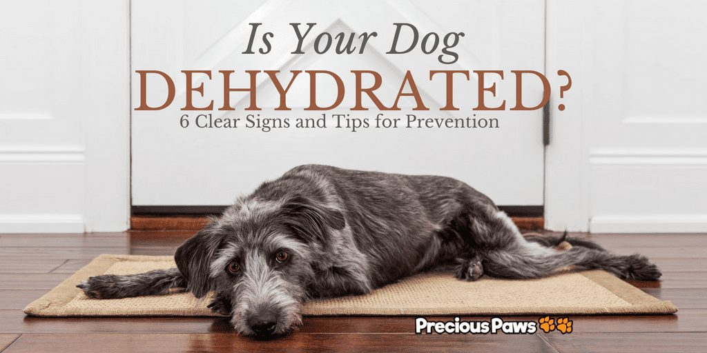 Is Your Dog Dehydrated?
