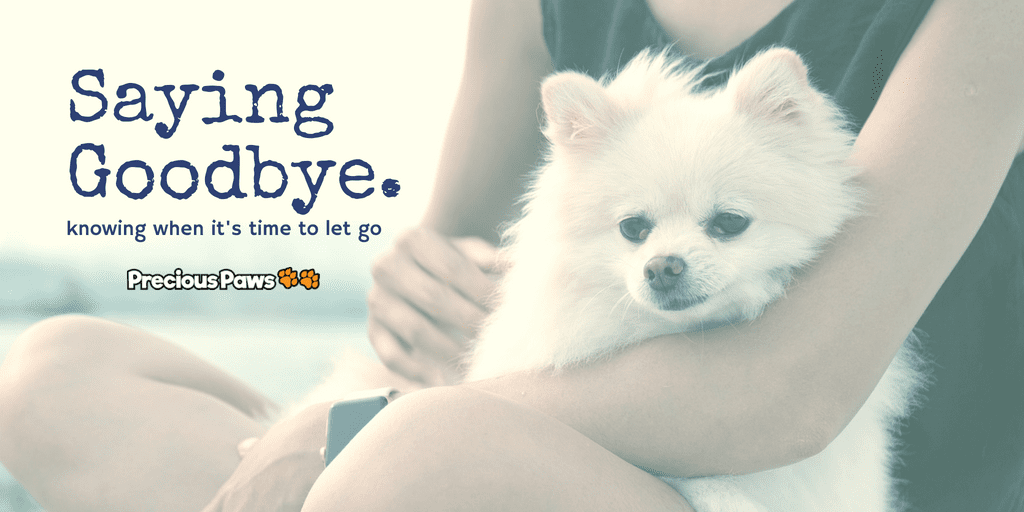 Knowing When to Say Goodbye to Your Dog