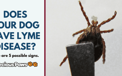 5 Signs of Lyme Disease in Dogs