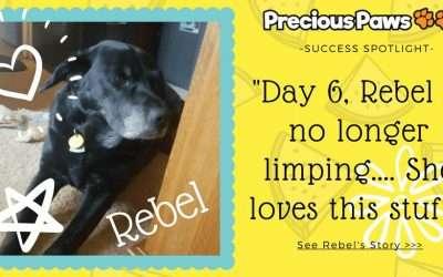 Success Spotlight: Rebel