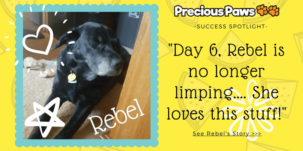 Success Spotlight: Rebel