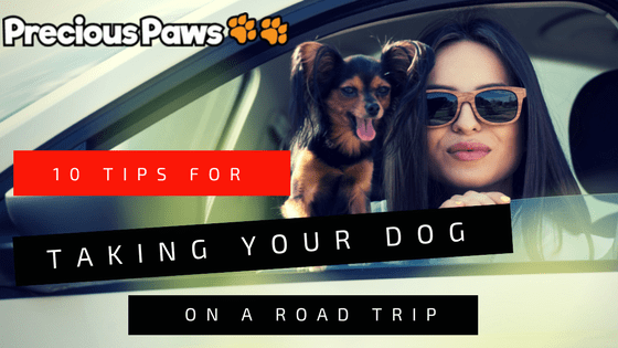 10 Tips for Taking Your Dog on a Road Trip