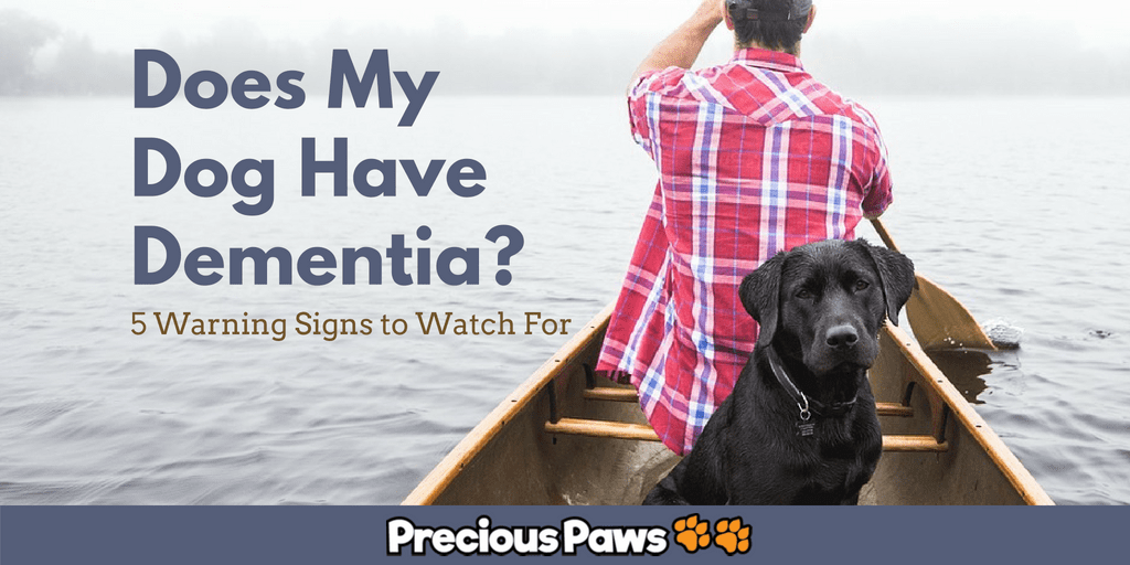 5 Signs Your Dog May Have Dementia