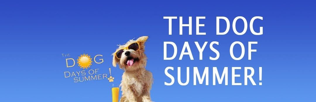 The Dog Days of Summer | Summer Care for Your Dogs