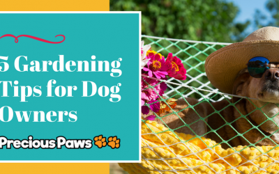 5 Gardening Tips for Dog Owners