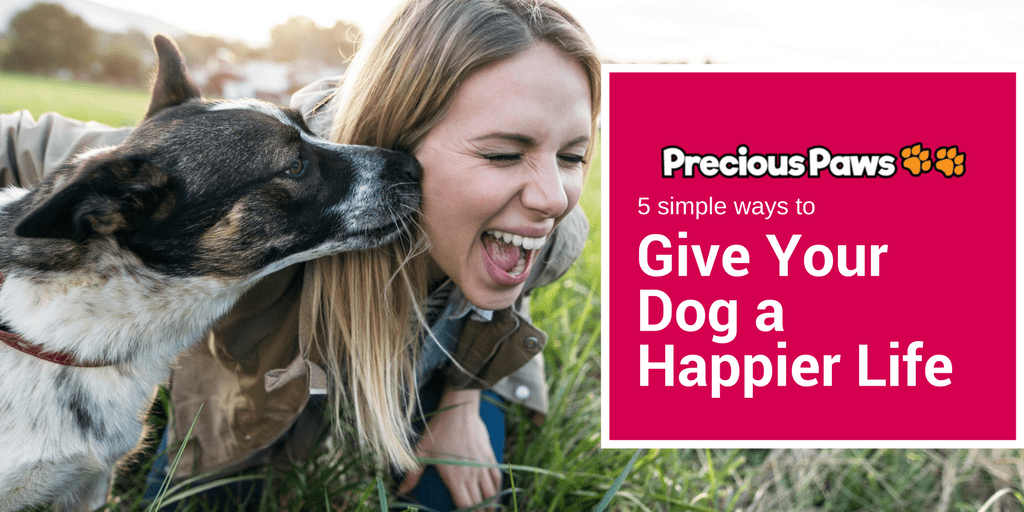 5 Simple Ways to Give Your Dog a Happier Life