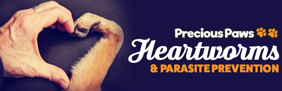 Heartworms & Parasites | Prevention