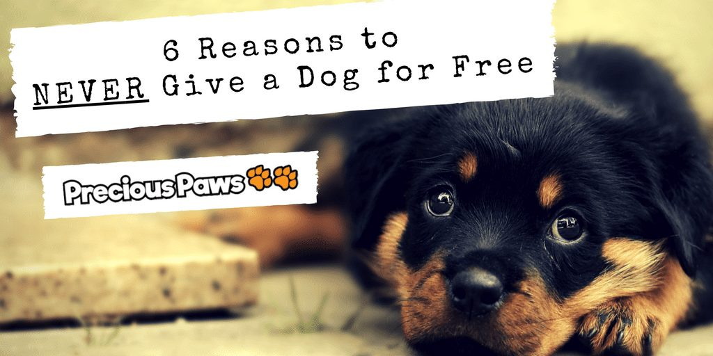 No Free Puppies – 6 Reasons to Never Give Away a Dog