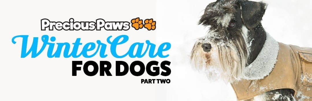 Winter Care Tips for Dogs | Part Two